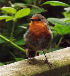 Talking robin to a robin is like talking French to a Frenchman...(The Secret Garden)