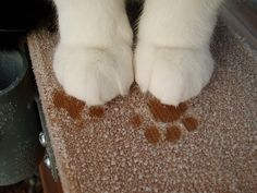 Cute, but cold, little paws in frost.