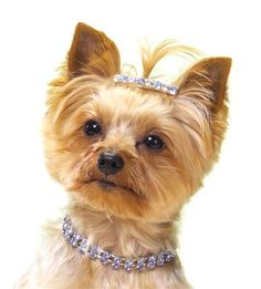 Diamonds are a Yorkies. Schnauzers, Yorkies, Shih Tzu, I Love Dogs, Cute Dogs, Tiffany & Co., Silky Terrier, Dog Necklace, Collar Necklace