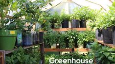 Vegetable garden in greenhouse Greenhouse Growing, Small Greenhouse, Greenhouse Wedding, Greenhouse Plans, Greenhouse Gardening, Container Gardening, Greenhouse Supplies, Garden Supplies, Starting A Garden
