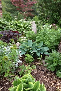Mary Homann's shade garden