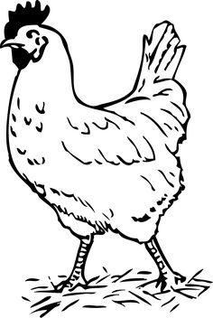 Free Image on Pixabay - Rooster, Bird, Chicken, Farm Cartoon Birds, Chicken Drawing, Botanical Drawings, Fruit Coloring Pages, Chicken Outline, Animal Outline, Outline Drawings, Farm Prints, Chicken Art