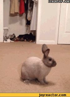 【閒聊】把貓嚇到飛起:黃瓜 @歡樂惡搞 KUSO 哈啦板 - 巴哈姆特