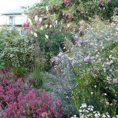 Evolution of a garden (and gardener!) as I go native - GardenDrum