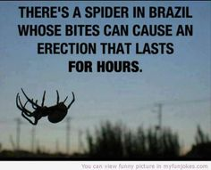 Theres a spider in Brazil whose bite… funny photo - http://www.myfunjokes.com/other-funny/theres-a-spider-in-brazil-whose-bite-funny-photo/ #funny  #jokes  #funnypictures  #animal  #pet  #haha  #cute
