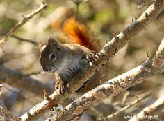 cute squirrels pictures | squirrel+(3).jpg