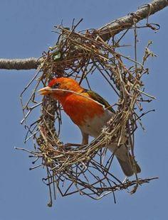 54 Best Nests Bowers Images Bird Nests Nature Nest Box