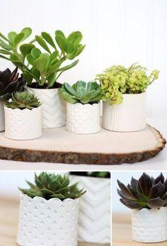 clay succulent pots