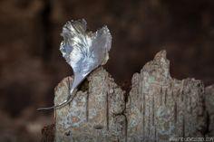 Zilveren smeedbroche 'blad' | Silver forged brooch 'leaf' Handmade Jewellery, Brooch, Silver, Jewelry, Handmade Jewelry, Jewlery, Jewerly, Brooches, Schmuck