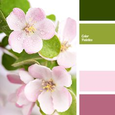 color of cherry, color of cherry flowers, dark lilac color, gentle shades of cherry blossoms, lilac shades, lime shades, pink shades, spring colors 2016, spring shades, white color.