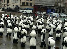 Panda Horde