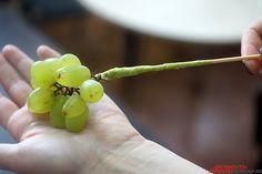 Чтобы «склеить» плоды, используйте флористическую ленту.