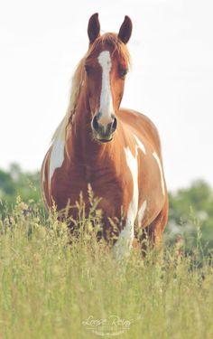 Horses. Always. : Photo