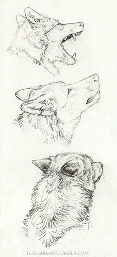 Cool Drawings, Drawing Sketches, Drawing Ideas, Sketch Ideas, Drawing Tips, Drawings Of Wolves, Anime Drawing Tutorials, Drawing Pictures, Drawing Projects