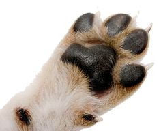 Dogs have thick, tough paw pads, but they still need TLC! Our lotion bar is perfect for that loving attention our best friends need. #Dogs #Paws #PawPads