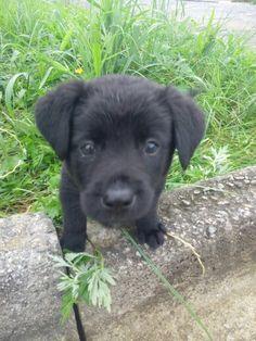 my baby Black....