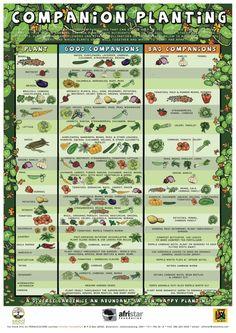 Companion-Planting_afristar