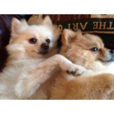 Jasper & Louie spooning!