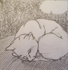Sleeping cat. Pencil drawing.