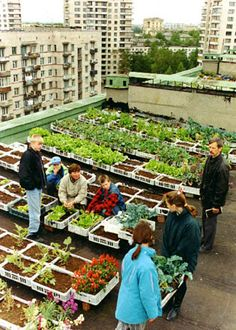 Rooftop gardens in the city    Photo credit: Center for Citizen Initiatives    St. Petersburg  http://www.fadr.msu.ru/mirrors/www.igc.apc.org/cci/roofpix.html