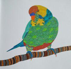 Parrot From Millie Marottas Animal Kingdom