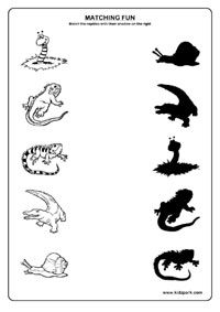 Reptiles Worksheets,Reptiles Matching Worksheets,Teachers