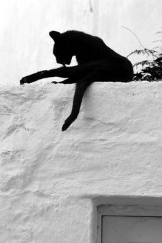 Black  cat bn by klausnello