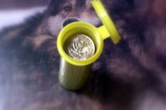Picture of Fill empty tube with quarters