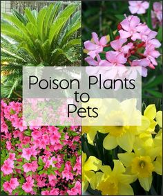 Keep Poison Plants Away with Ernest T. Bass