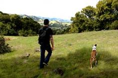 Best Off-leash dog hikes in bay area