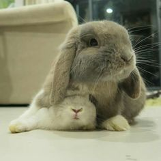 I've got you covered ... #house #rabbits
