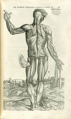 Muscle man, c.54.k.12, pg.197