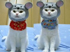 Cat Clothes for Holidays Review - http://www.mypetarticles.com/cat-clothes-for-holidays-review/#more-2089