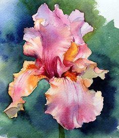 Iris watercolor by Ann Mortimer