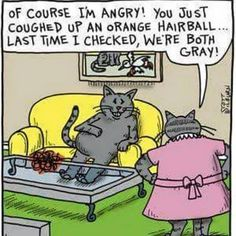 Official website of The Argyle Sweater featuring Scott Hilburn's daily Argyle Sweater comic panel and more, presenting a hilarious look at the world you think you know. Cat Jokes, Funny Cat Memes, Funny Cartoons, Funny Comics, Cat Humour, Memes Humor, Funny Shit, Funny Cute, Hilarious