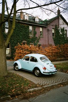 favorite color & car