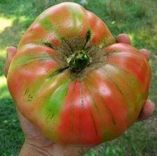 Brandywine tomato seeds from Hudson Valley Seed Library