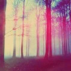 ... forest... by Michal Mozolewski, via Behance