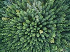 Air Drone, Phantom 4, Cabins In The Woods, Aerial Photography, Forests, Hygge, Arctic, Finland, Surgery