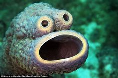 Cookie monster is that you?   This familiar face is actually that of a sea sponge. The resemblance is uncanny!
