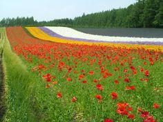 Daisy and I want to go to Hokkaido.