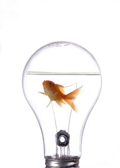 It is an overused word and very often, not recognized for what it really is or what it means but instead what people want to believe it means. Innovation is not something you teach or buy, innovati...