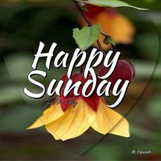 151 Great Happy Sunday Enjoy Your Day Of Rest Images Good