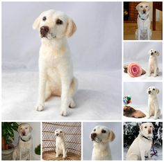 Labrador 'Taggy' needle felted dog | by adore62