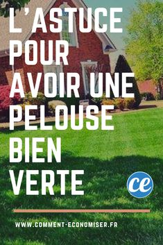green grass tips lawns ~ green grass tips lawns . green grass tips lawns yards