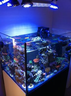 Reef Central is dedicated to the marine reef aquarium hobby. Learn about reef aquarium setup and maintenance, and view coral and marine fish photos. Cool Fish Tanks, Saltwater Fish Tanks, Saltwater Aquarium, Aquarium Fish Tank, Freshwater Aquarium, Marine Fish Tanks, Marine Tank, Coral Reef Aquarium, Marine Aquarium