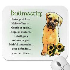 Bullmastiffs are the sweetest dogs.