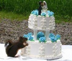 squirrel eats wedding cake---Oh, dear!