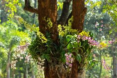 How to create an orchid tree