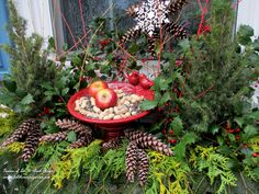 Winter Bird Feeder Window Box (Garden of Len & Barb Rosen) http://ourfairfieldhomeandgarden.com/winter-decorating-at-our-fairfield-home-garden/